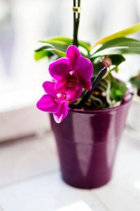 flower-pink-houseplants-orchid