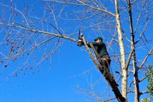 tree-100589_1280